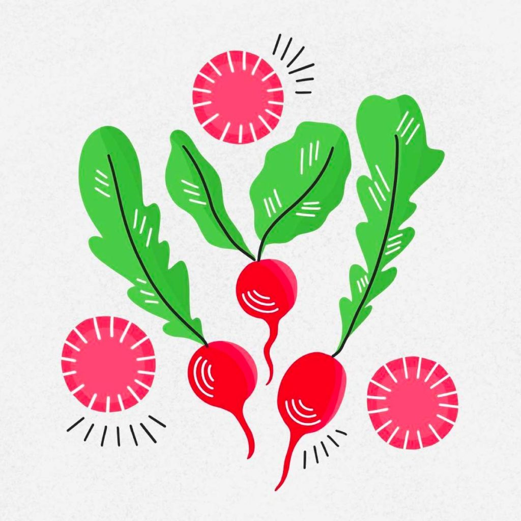Radishes Illustration | Lindsay Goldner - No Fonts Given Co