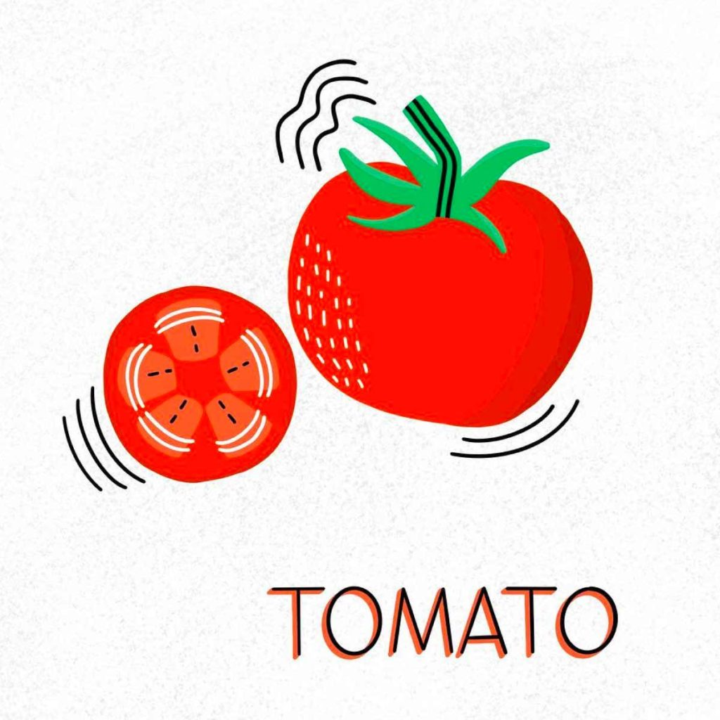 Tomato Illustration | Lindsay Goldner - No Fonts Given Co